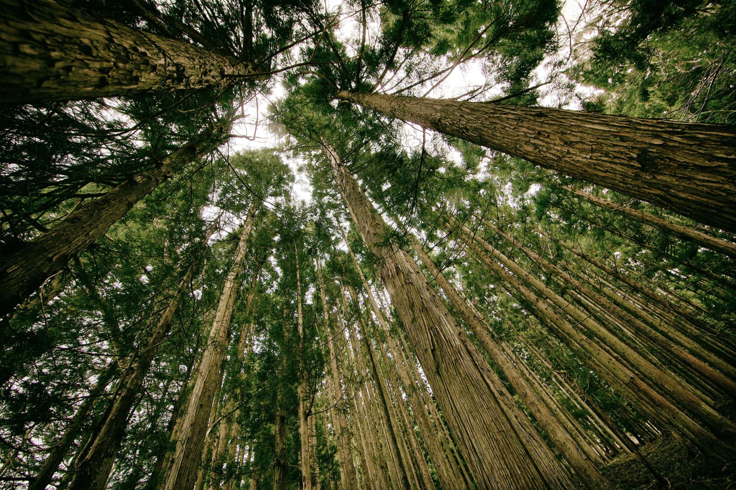 Возобновляемое сырье и защита природы